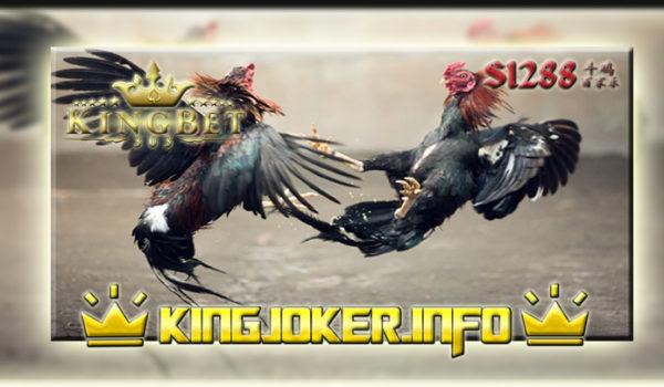 Agen Sabung Ayam S1288 Terbesar Laga Ayam, Memacu Adrenalin!