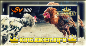 Kamu Tahu? Suplemen Tradisional Ayam Bangkok Versi Agen Sv388