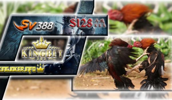 Sabung Ayam Filipina Terpopuler Bersama Agen Terpercaya S1288