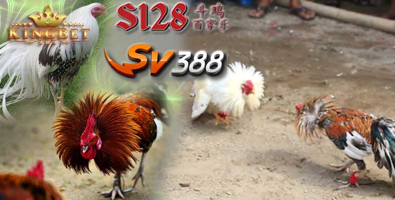 S128 Ayam Live