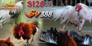 Ayam S1288