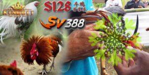Bandar Ayam S1288