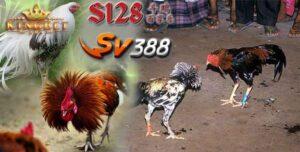 Tarung Ayam S128