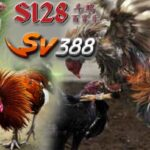 Ayam S1288 Online